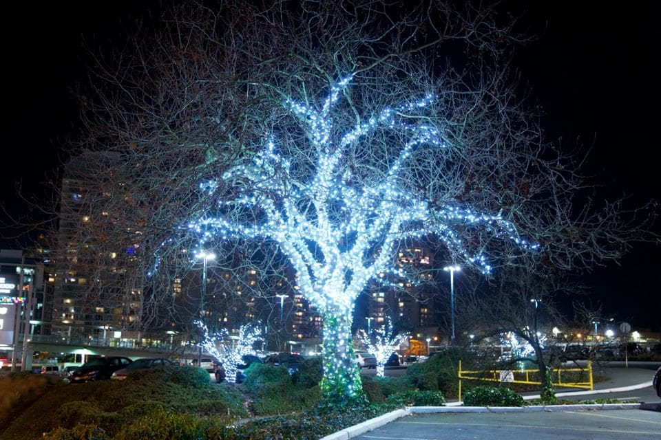 Commercial Lighting Install - Pure White Mini Light Tree Wrap