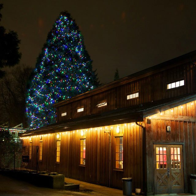 Commercial Christmas Light Installation - Multicoloured Lights In Sequoia Tree