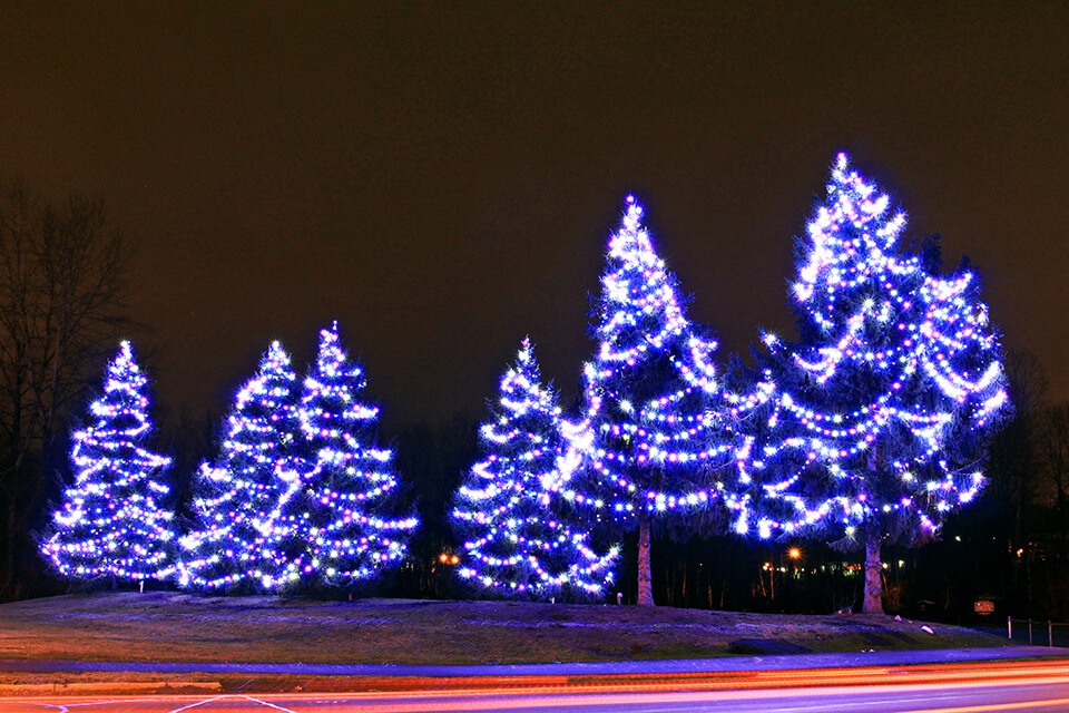 Commercial Christmas Lighting - Super-Bright Globe Lights on Evergreen Trees - Pink Teal and Pure-White