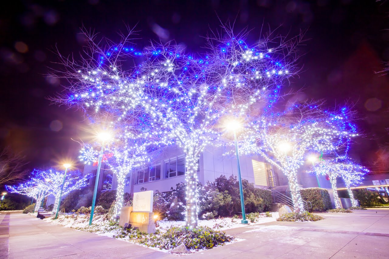 Commercial Tree Lights - Trunk and Branch Wrap Pure-white and Blue