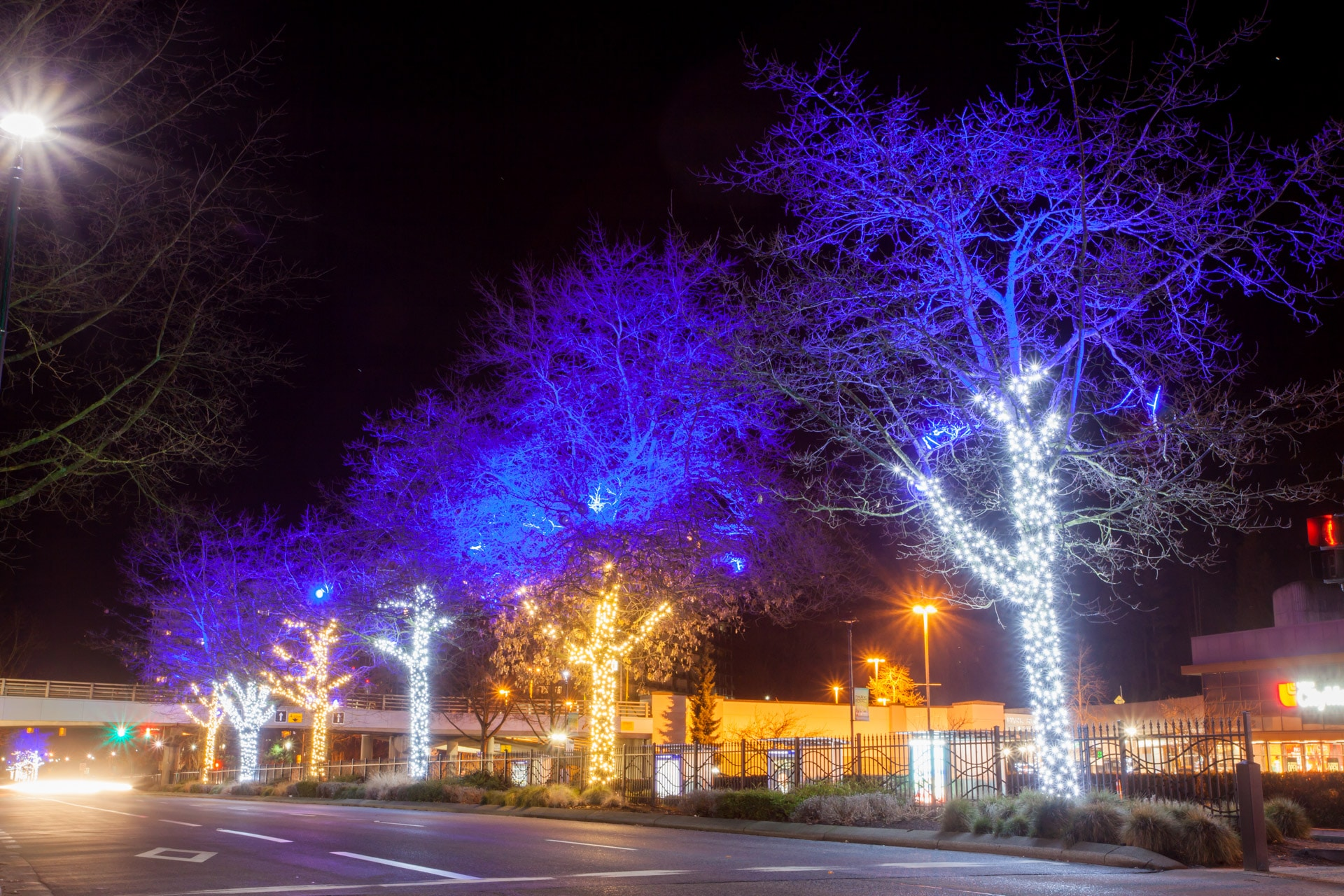 Cold and Warm White with Purple Christmas Tree Commercial Lighting Installation