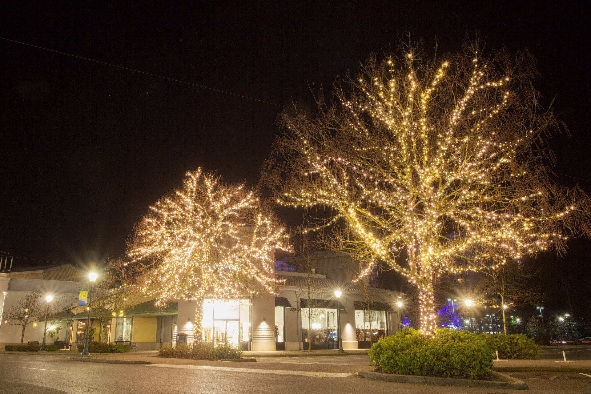 Warm White Tree and Branch Wrap Commercial Christmas Light Installation