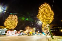 FestiLight - Commercial Christmas Light Installation - Warm White Tree Wraps - Street Decoration