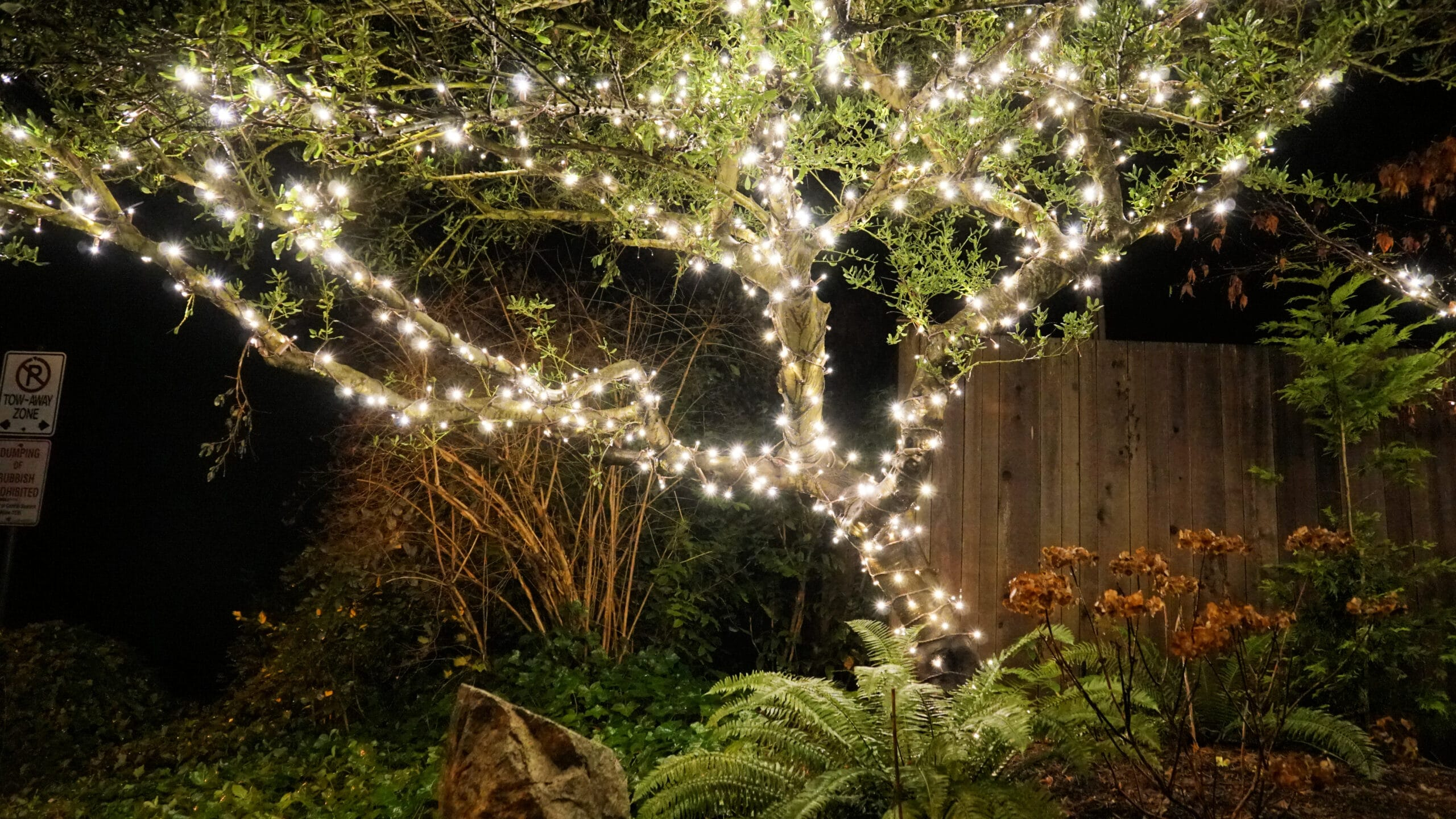 FestiLight - White String Lights - Residential Install - Christmas Decorations